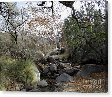 Madera Creek Canvas Print by Feva Fotos