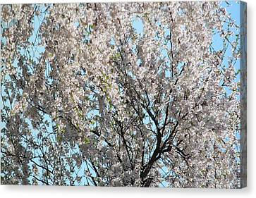 Magic Of Spring Canvas Print by The Art Of Marilyn Ridoutt-Greene