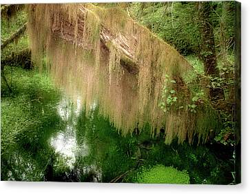 Magical Hall Of Mosses - Hoh Rain Forest Olympic National Park Wa Usa Canvas Print by Christine Till