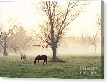 Magical Morning Canvas Print by Scott Pellegrin