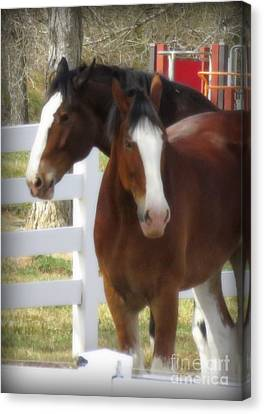 Magnificant Horses - The Clydesdales -17 Canvas Print by Diane M Dittus