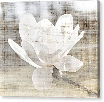Magnolia Flower Canvas Print by Elena Elisseeva