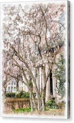 Magnolias In Back Bay Canvas Print by Edward Fielding