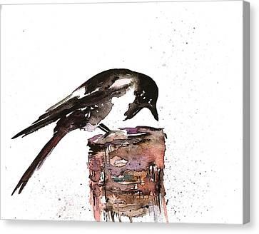 Magpie On A Stump Canvas Print by Carolyn Doe
