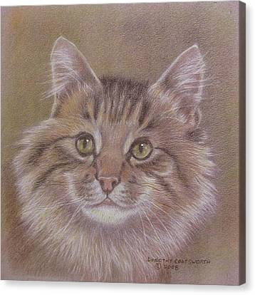 Maine Coon Cat Canvas Print by Dorothy Coatsworth