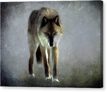 Majestic Wolf Canvas Print by David Dehner