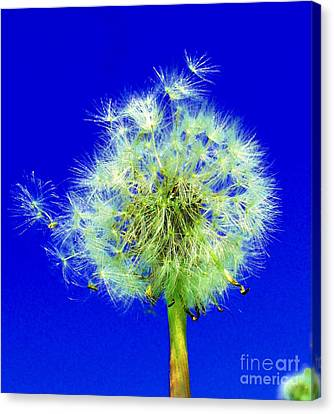 Canvas Print featuring the digital art Make A Wish by Rodney Campbell