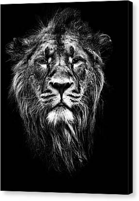 Male Asiatic Lion Canvas Print by Meirion Matthias