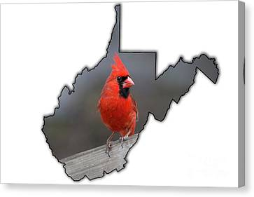 Male Cardinal One Of The Most Recognizable Birds Canvas Print by Dan Friend