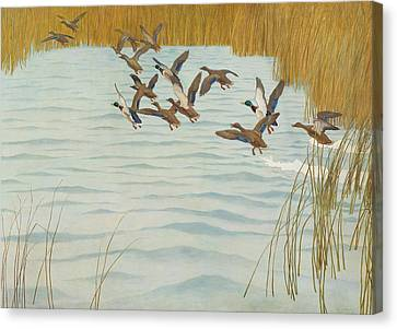 Mallards In Autumn Canvas Print by Newell Convers Wyeth