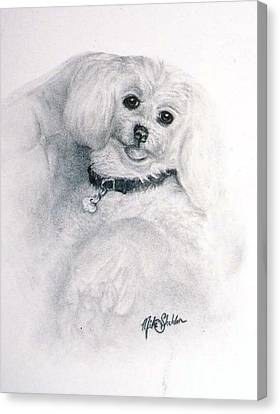 Maltese Dog Canvas Print by Mike Sheldon