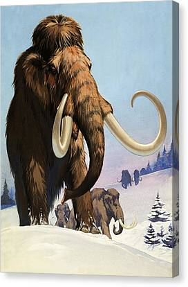 Mammoths From The Ice Age Canvas Print by Angus McBride