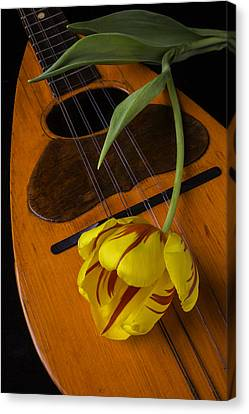 Mandolin With Red And Yellow Tulip Canvas Print by Garry Gay