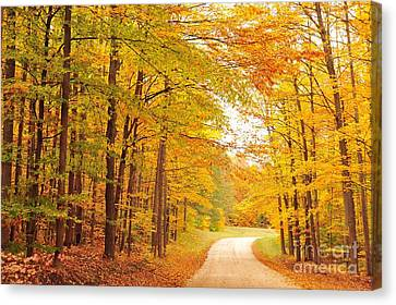 Manisee National Forest In Autumn Canvas Print by Terri Gostola