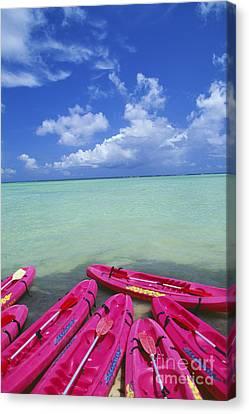 Many Pink Kayaks Canvas Print by Dana Edmunds - Printscapes