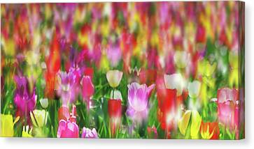 Many Tulips Canvas Print by Ralph Klein