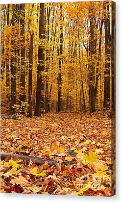 Maple Forest In Autumn Canvas Print by Mircea Costina Photography