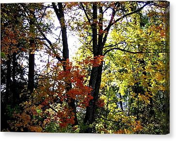 Maple Mania 16 Canvas Print by Will Borden