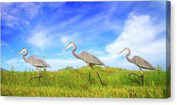 March Of The Great Blue Herons Canvas Print by Mark Andrew Thomas