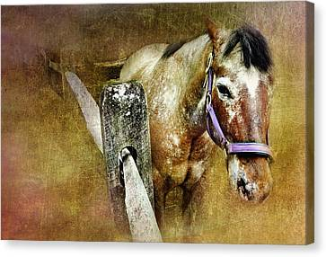 Mare Canvas Print by Diana Angstadt