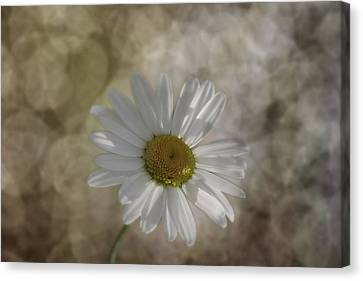 Marguerite Art 2 Canvas Print by Ralph Klein