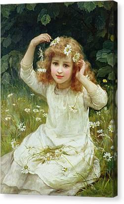 Marguerites Canvas Print by Frederick Morgan