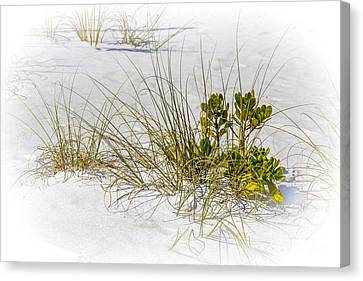 Marngrove And Sea Oats Canvas Print by Marvin Spates