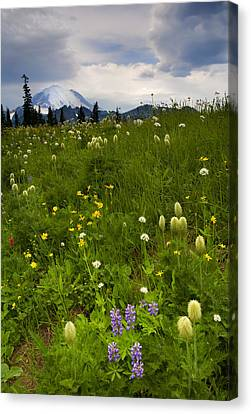 Meadow Beneath The Storm Canvas Print by Mike  Dawson
