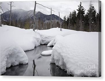 Meadow Brook - White Mountains New Hampshire  Canvas Print by Erin Paul Donovan
