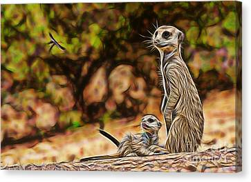 Meerkat Canvas Print by Marvin Blaine