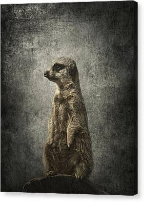 Meerkat Portrait Canvas Print by Greg Noblin