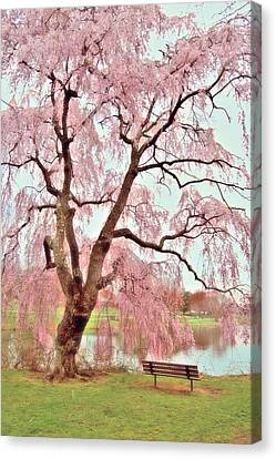 Meet Me Under The Pink Blooms Beside The Pond - Holmdel Park Canvas Print by Angie Tirado