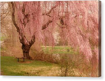 Memories - Holmdel Park Canvas Print by Angie Tirado