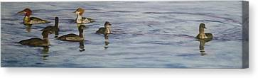 Mergansers Join In Canvas Print by Terry Honstead