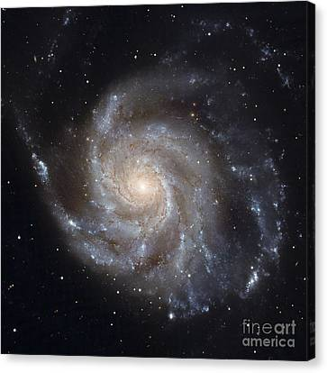 Messier 101, The Pinwheel Galaxy Canvas Print by Stocktrek Images