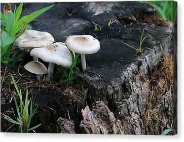 Mid Summers Fungi Canvas Print by Rick Morgan