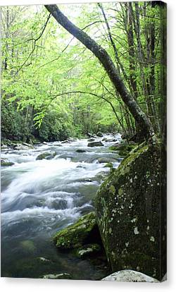 Middle Fork River Canvas Print by Marty Koch