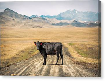 Middle Of The Road Canvas Print by Todd Klassy