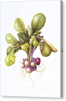 Miniature Turnips Canvas Print by Margaret Ann Eden