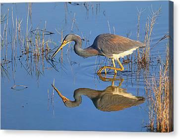 Mirror, Mirror  Canvas Print by John Absher