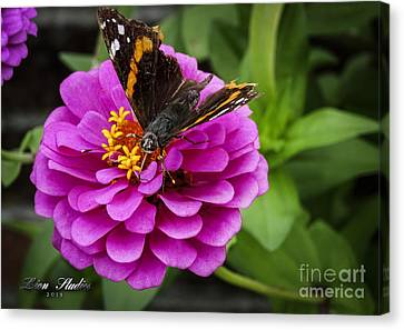 Mister Butterfly On A Pink Flower Canvas Print by Melissa Messick