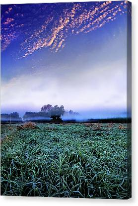Misty Frost Canvas Print by Phil Koch