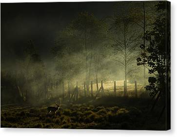 Misty Morning Canvas Print by Nunu Rizani
