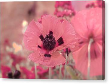 Misty Pink Canvas Print by Scott Carruthers