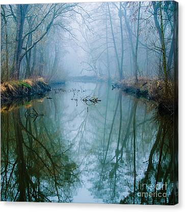 Misty Swamp Canvas Print by Unknow
