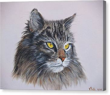 Mitze Maine Coon Cat Canvas Print by Vicky Path