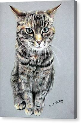 Molly 2 Canvas Print by Tanya Patey
