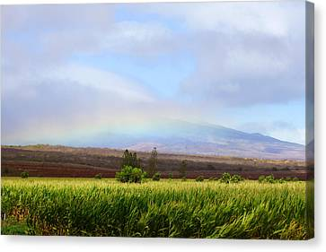 Molokai Cornfields  Canvas Print by Kevin Smith