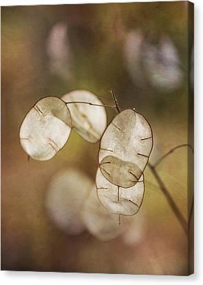 Money Plant Canvas Print by Dale Kincaid