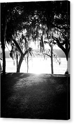 Monochrome Spanish Moss Canvas Print by Shelby Young